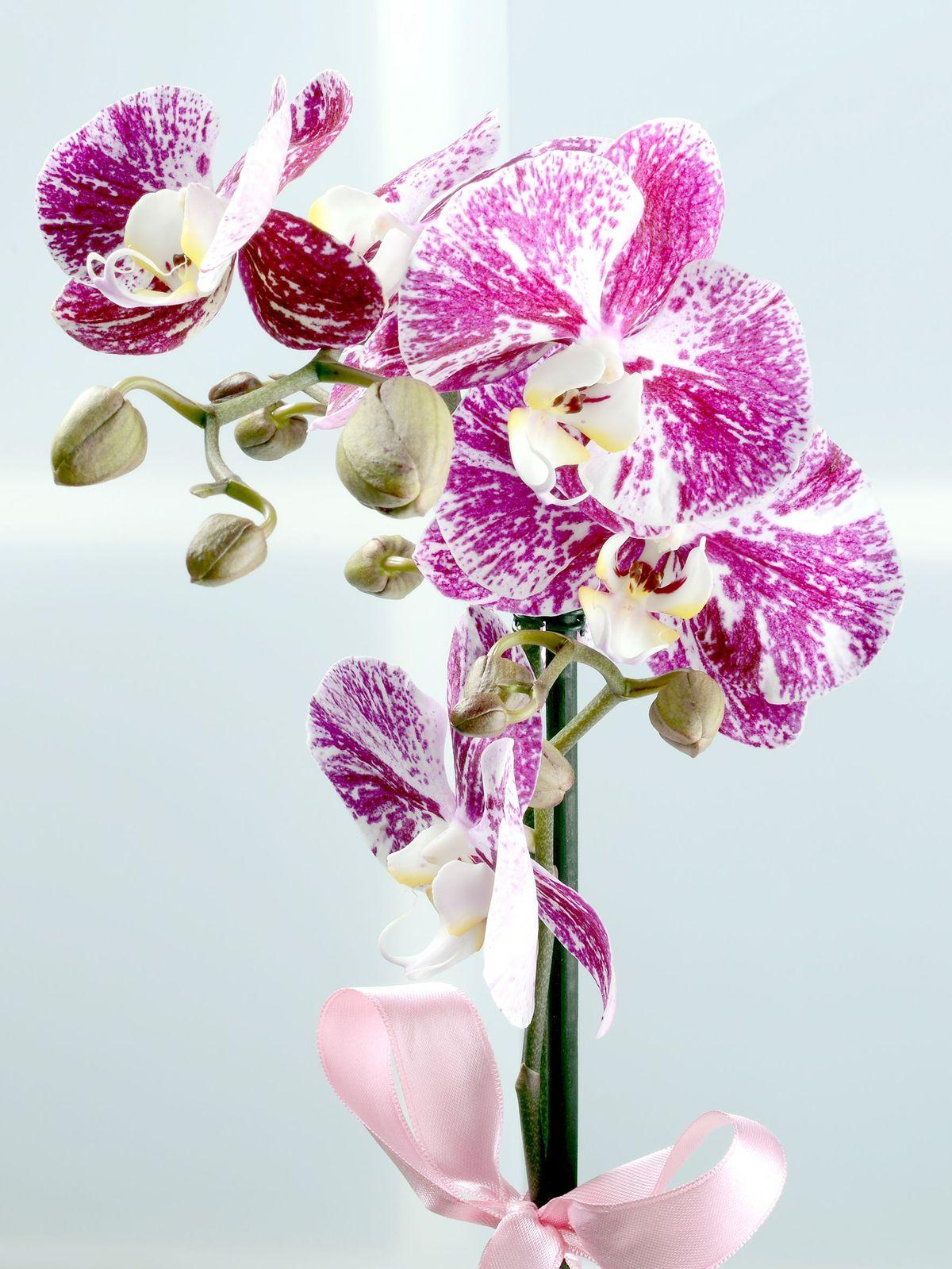 Tek Dallı Pembe Orkide Çiçeği Orkideler çiçek gönder