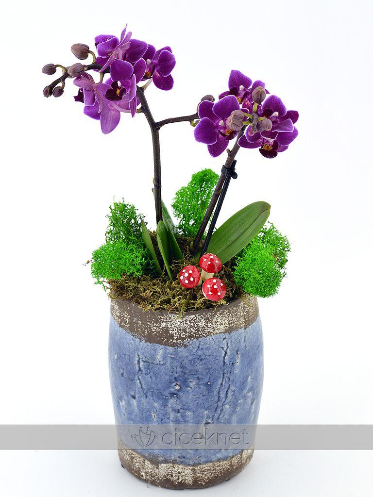Çocuk Boyu Minyatür Orkide  çiçek gönder