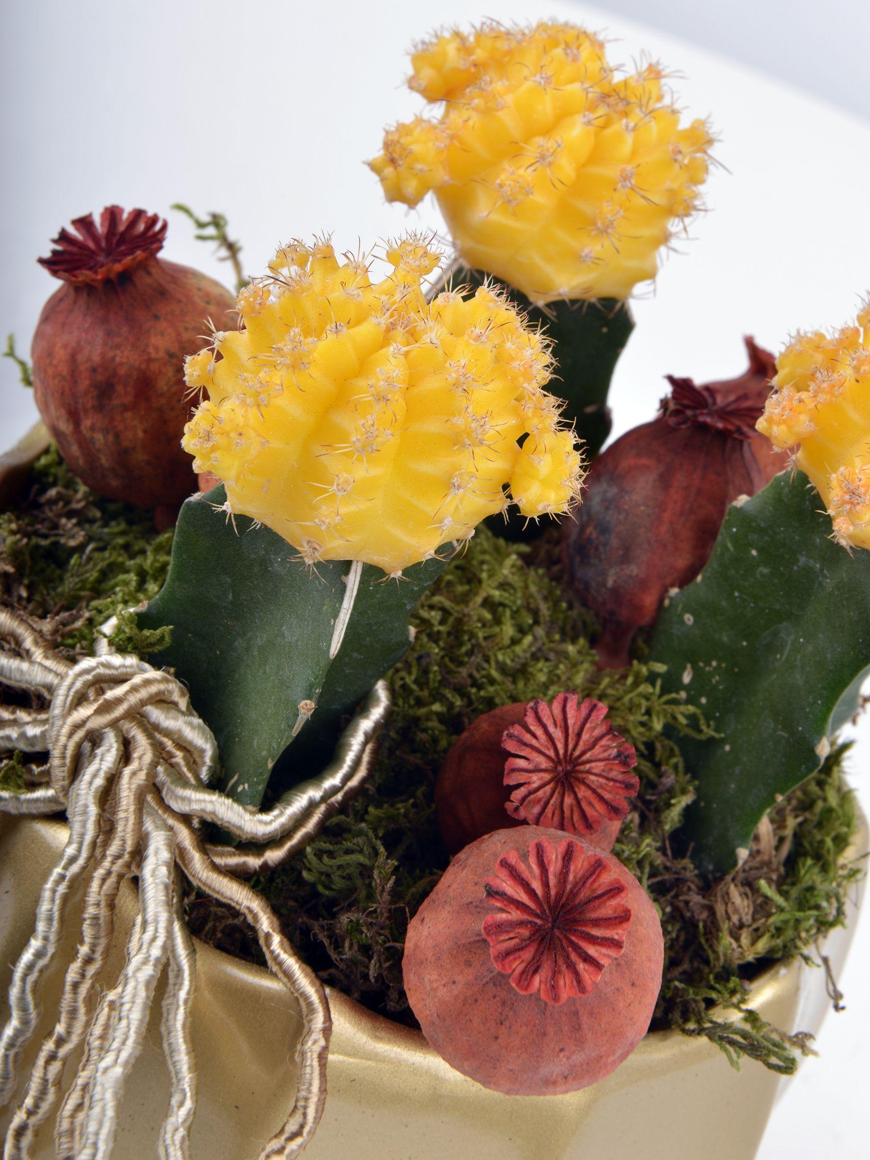 Renkli Kaktüs Dünyası Terarium çiçek gönder