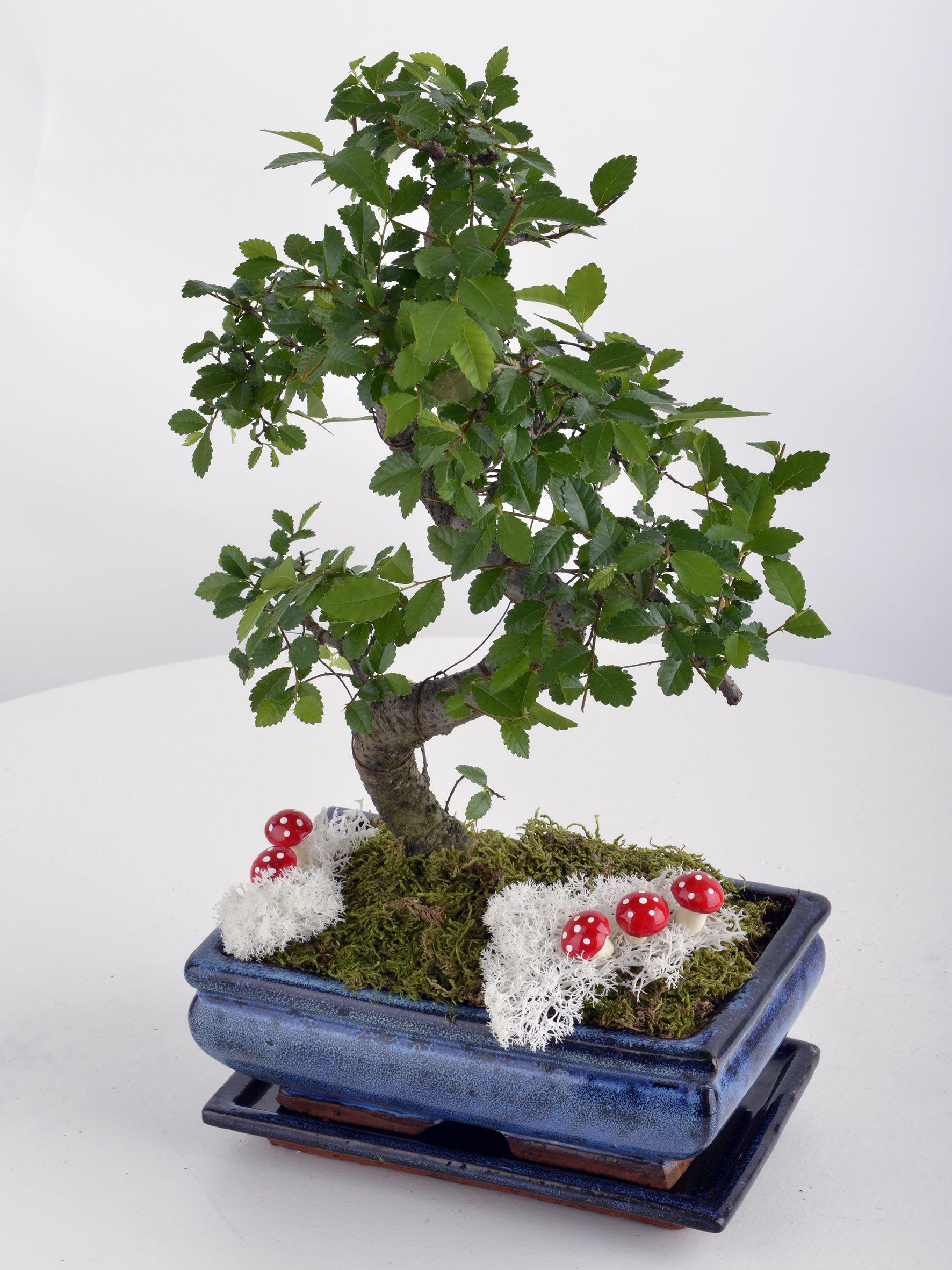 Bonsai Saksı Çiçeği  çiçek gönder