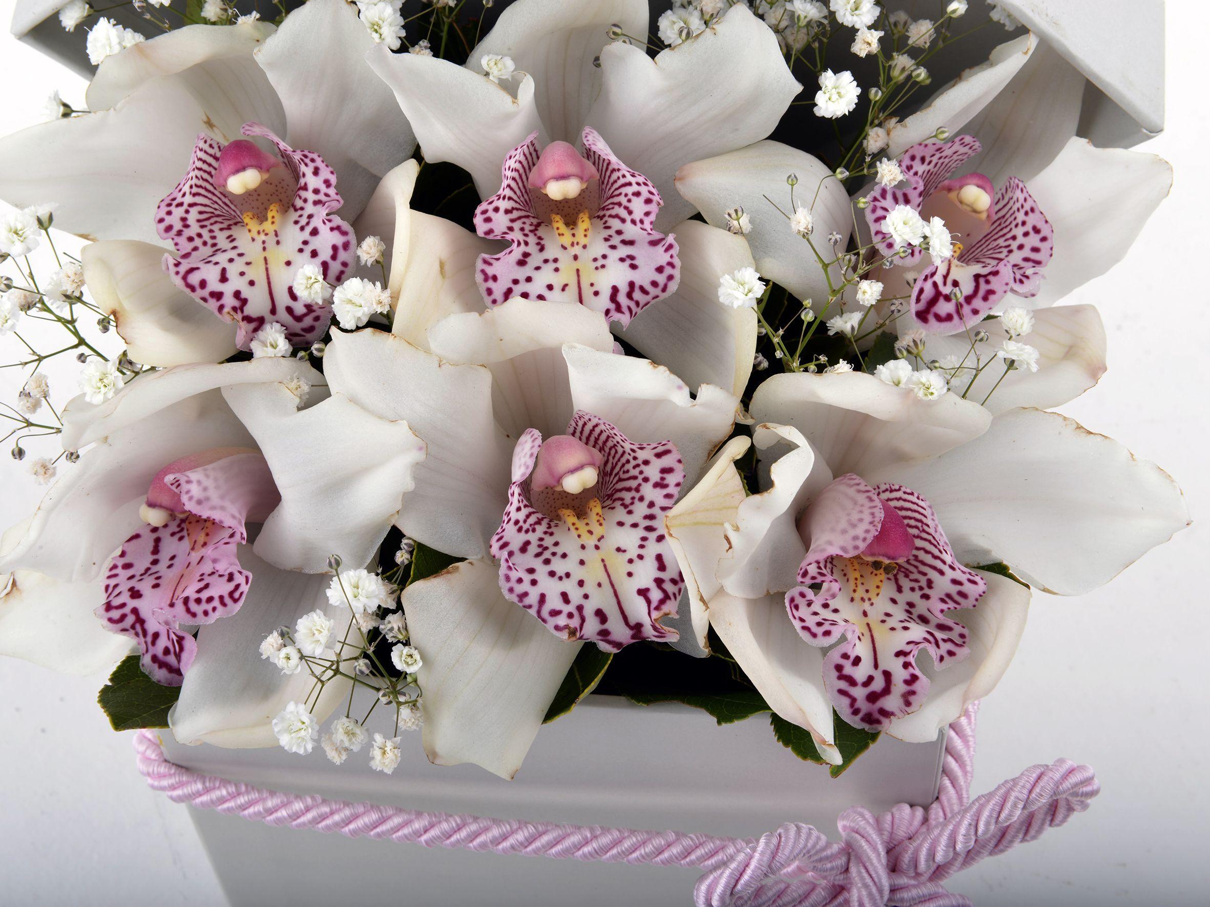 Kutuda Beyaz Spidyum Orkide Kutuda Çiçek çiçek gönder