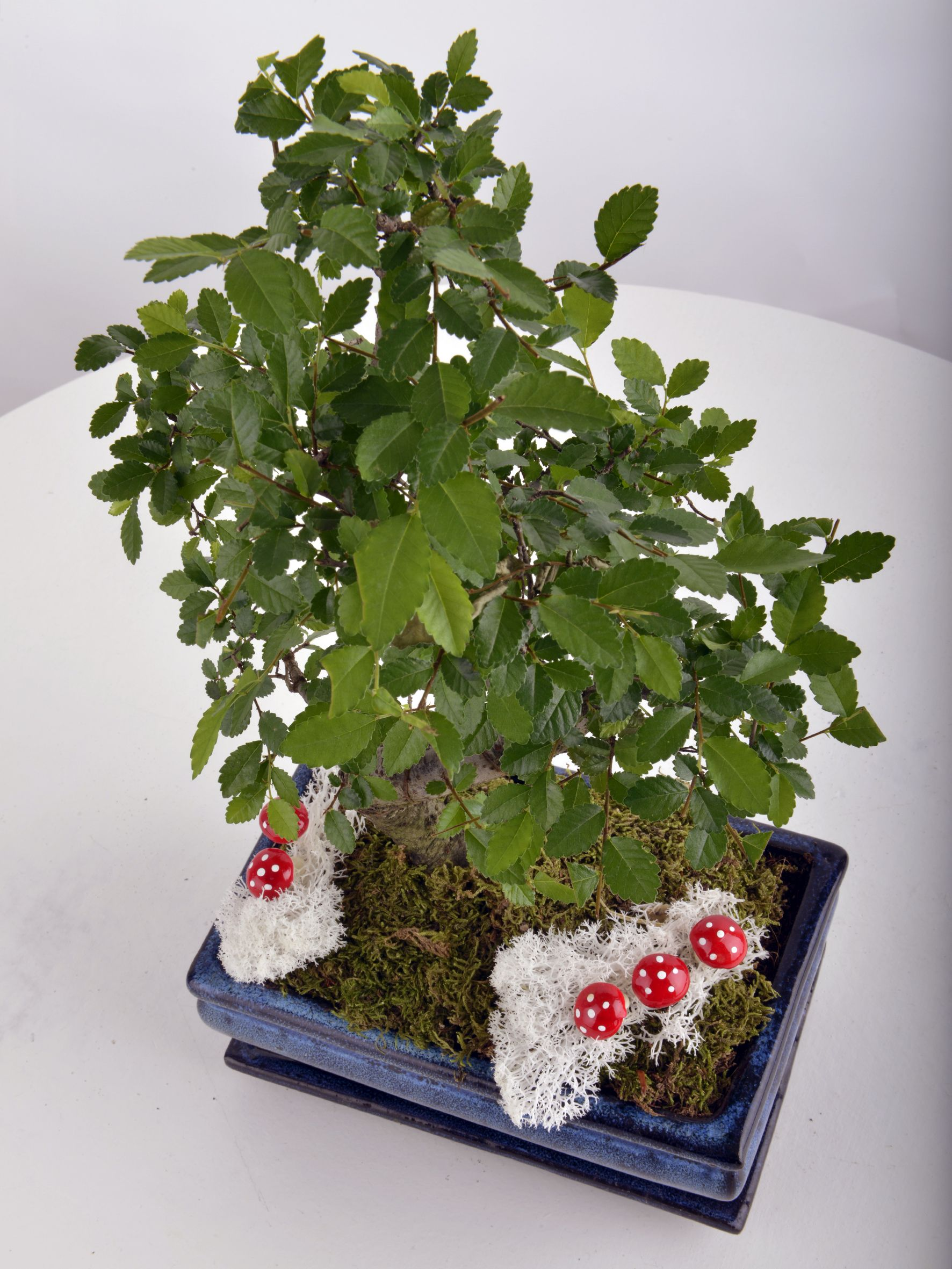 Bonsai Saksı Çiçeği Saksı Çiçekleri çiçek gönder