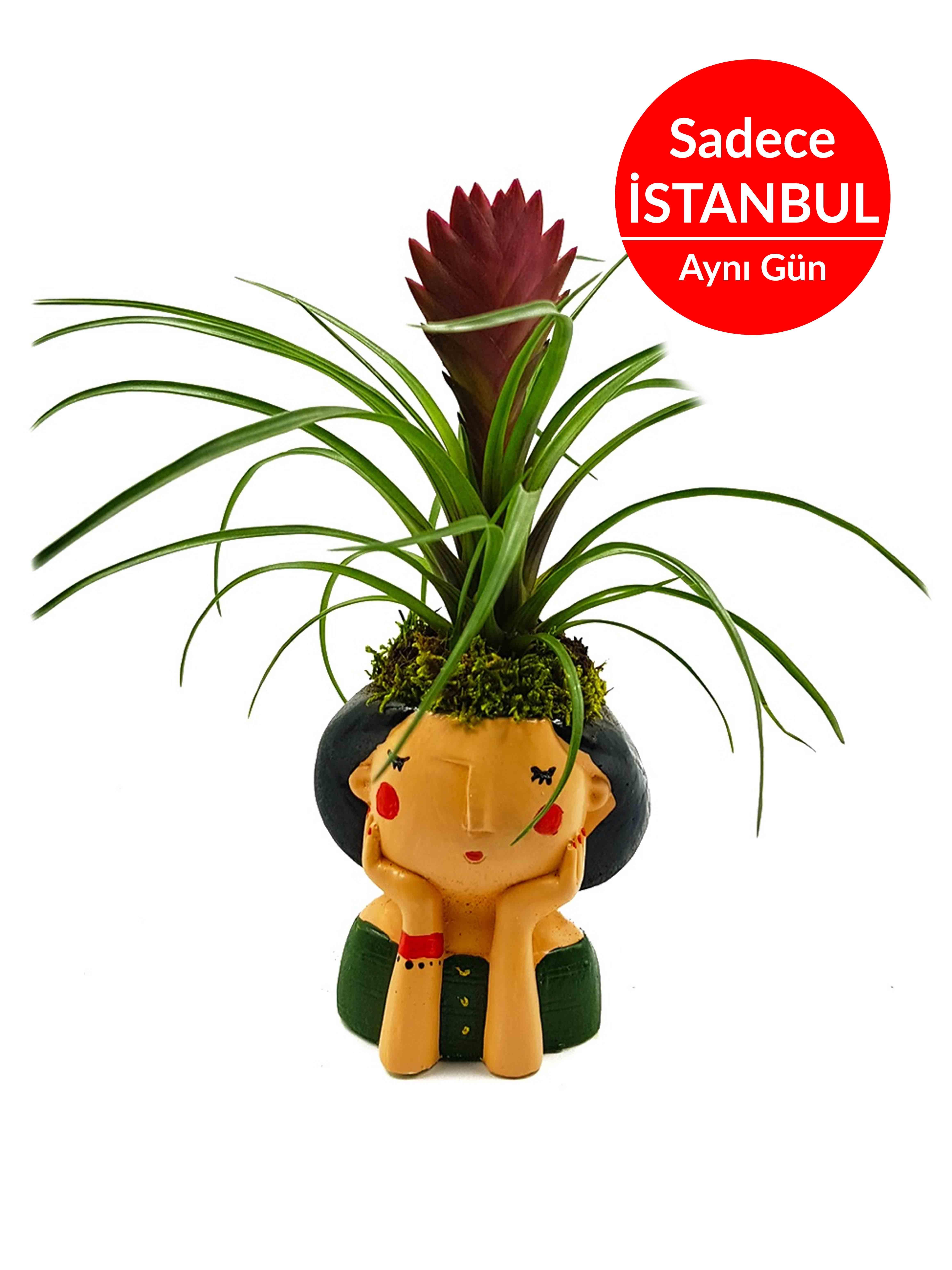 Frida Tilandisia Terarium çiçek gönder