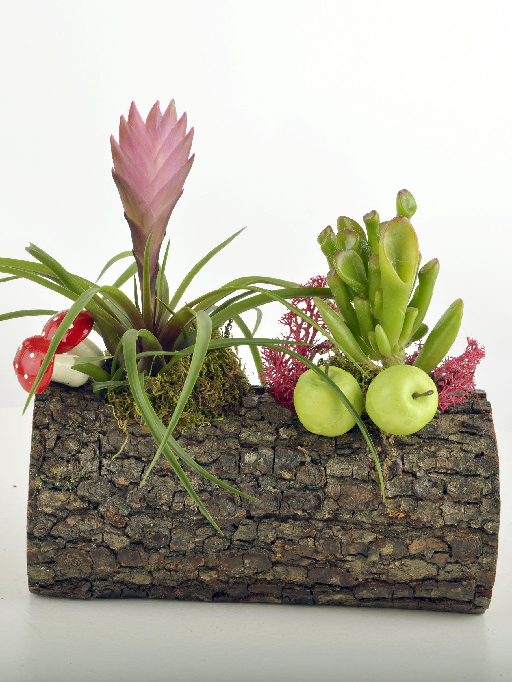 Doğa Harikası Teraryum  çiçek gönder