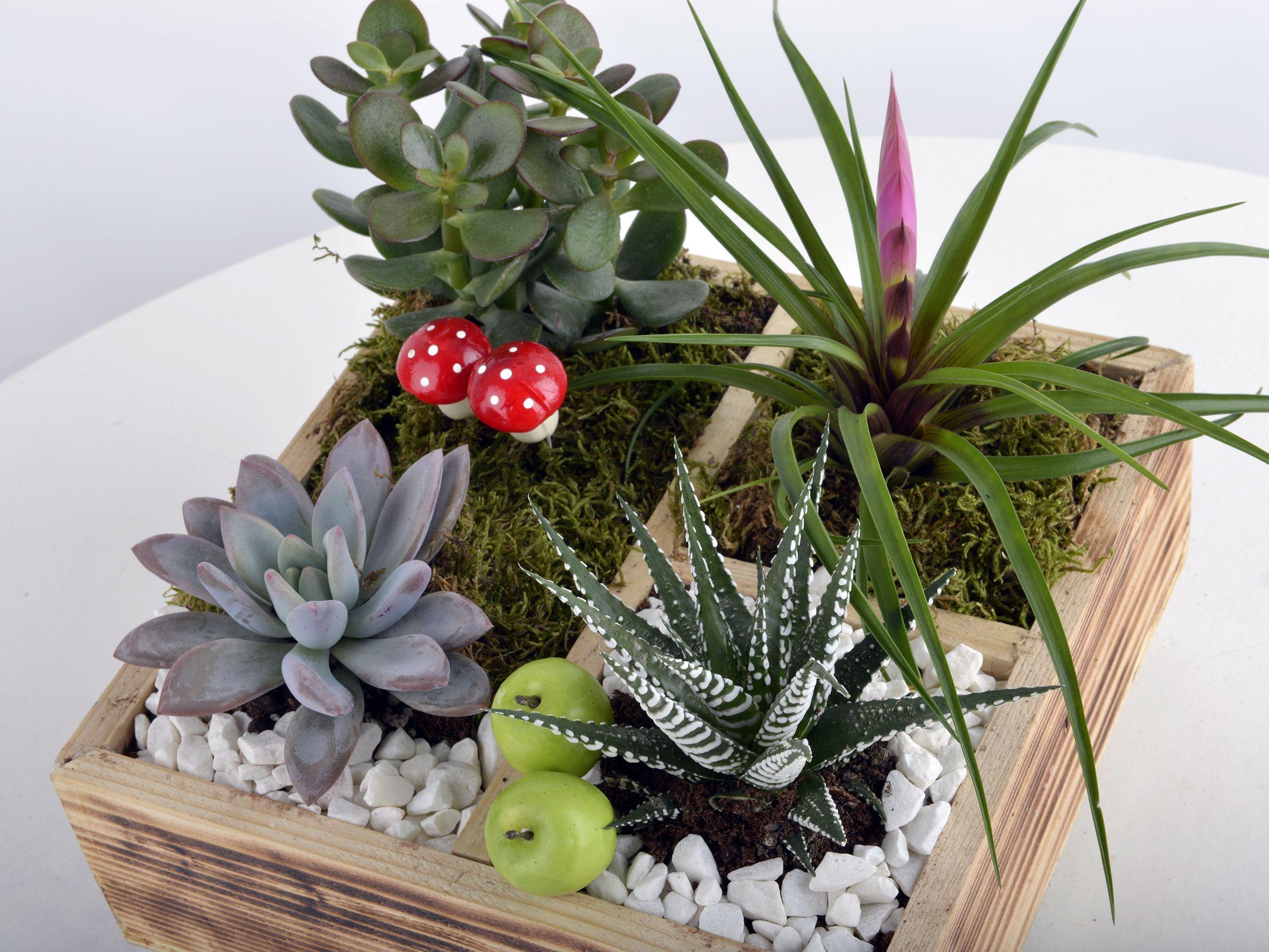 Huzur Dolu Bir Bahçe Terarium çiçek gönder
