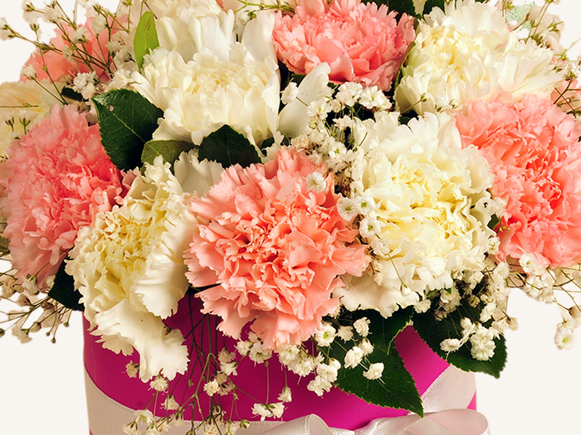Pembe ve Beyaz Karanfilli Çiçek Arajmanı. Kutuda Çiçek çiçek gönder
