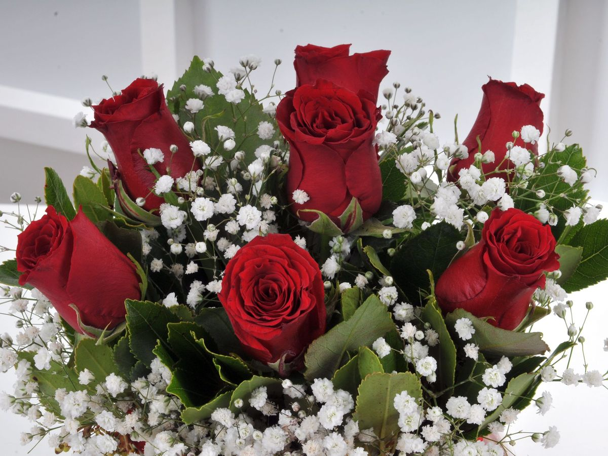 Fanus ta  7 Kırmızı Gül Arajmanı. Aranjmanlar çiçek gönder