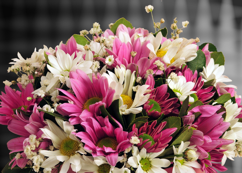 Pembe Silindir Kutuda Bahar Çiçekleri. Kutuda Çiçek çiçek gönder