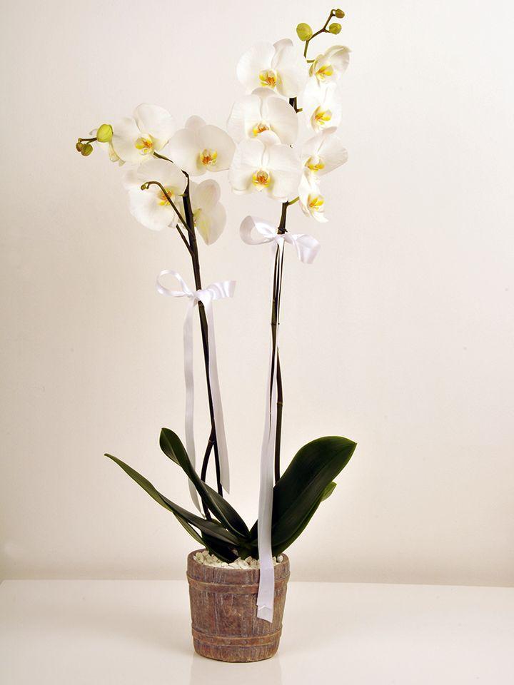 Çift Dallı Beyaz Orkide  çiçek gönder