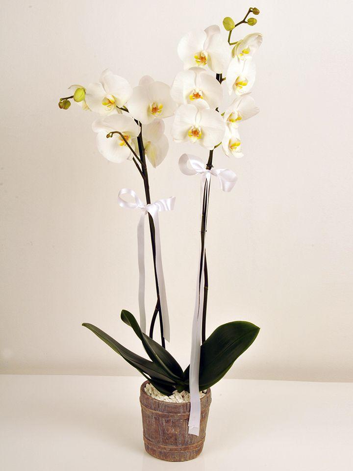 Çift Dallı Beyaz Orkide Orkideler çiçek gönder