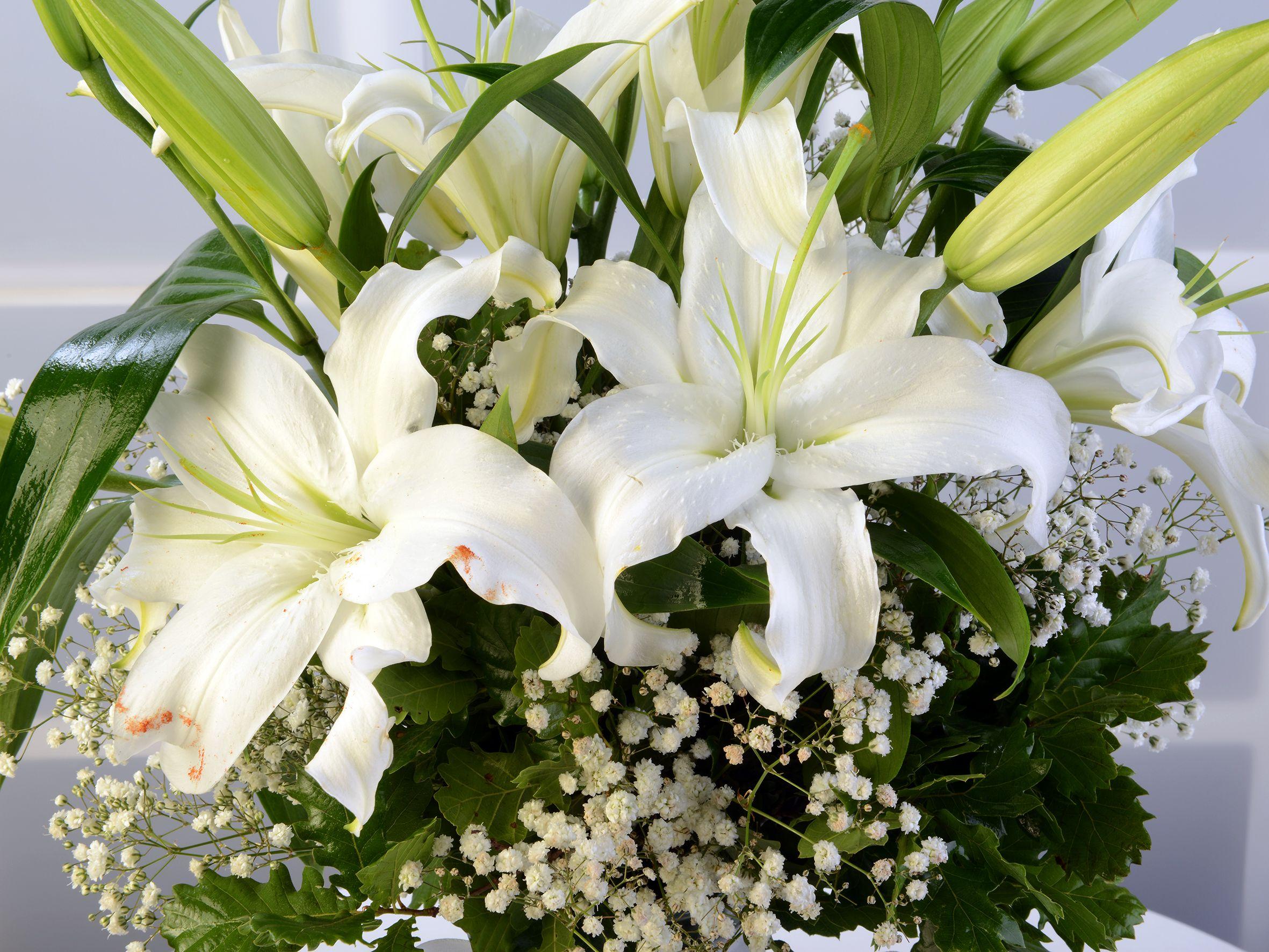 Amfora Cam Vazoda Lilyum Aranjmanı. Aranjmanlar çiçek gönder