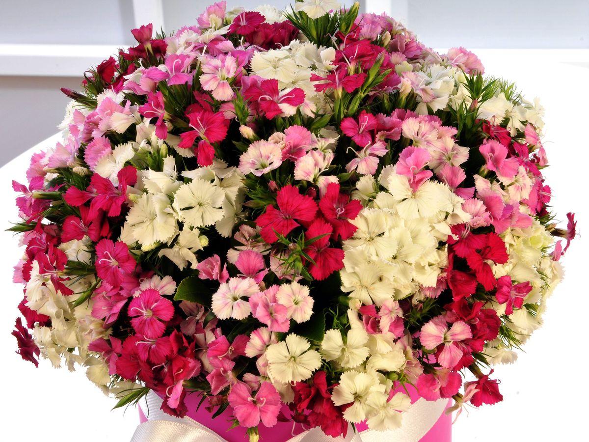 Rengarenk. Kutuda Çiçek çiçek gönder