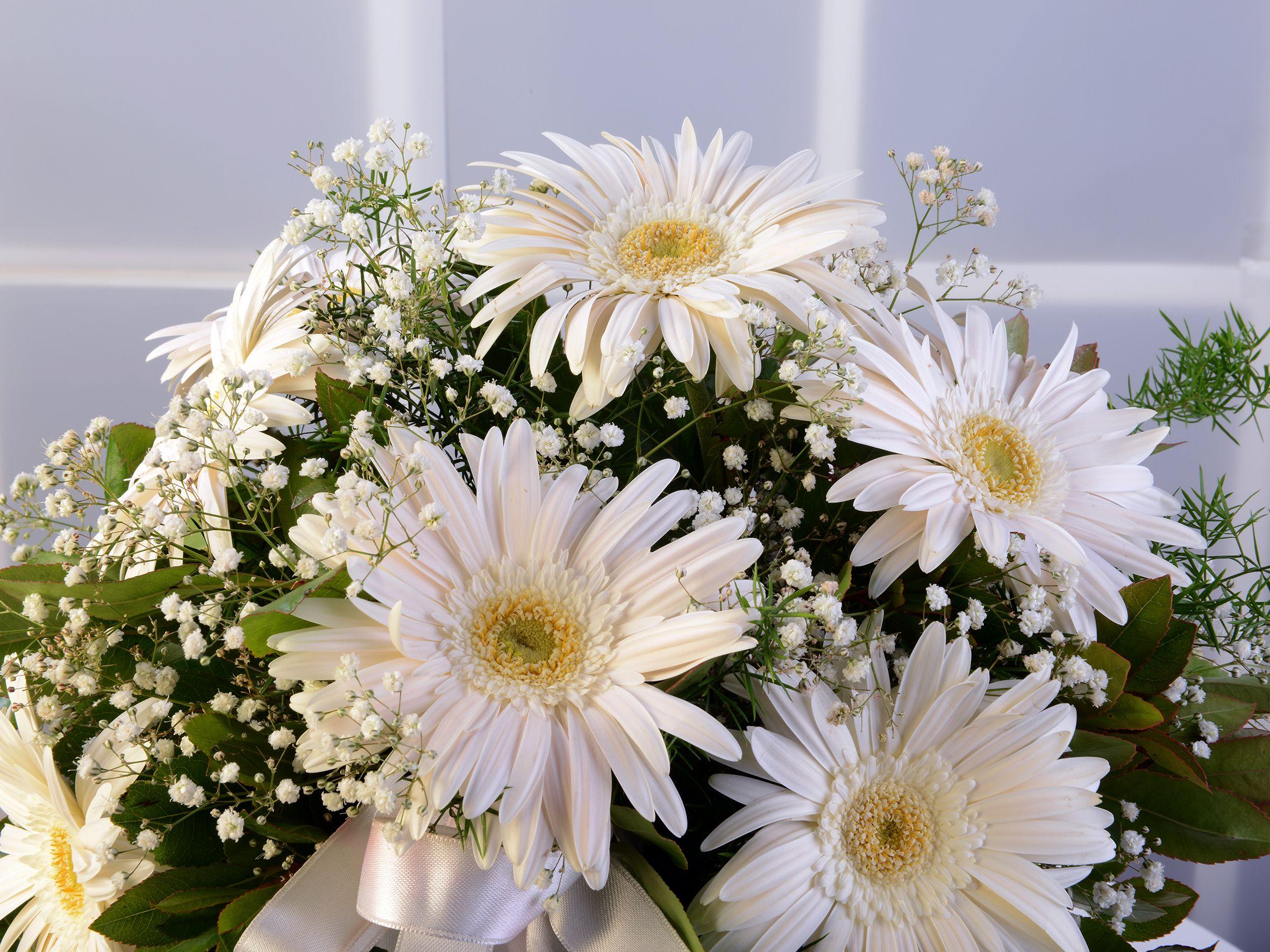 Amfora Cam Vazoda Beyaz Gerbera Aranjmanı. Aranjmanlar çiçek gönder