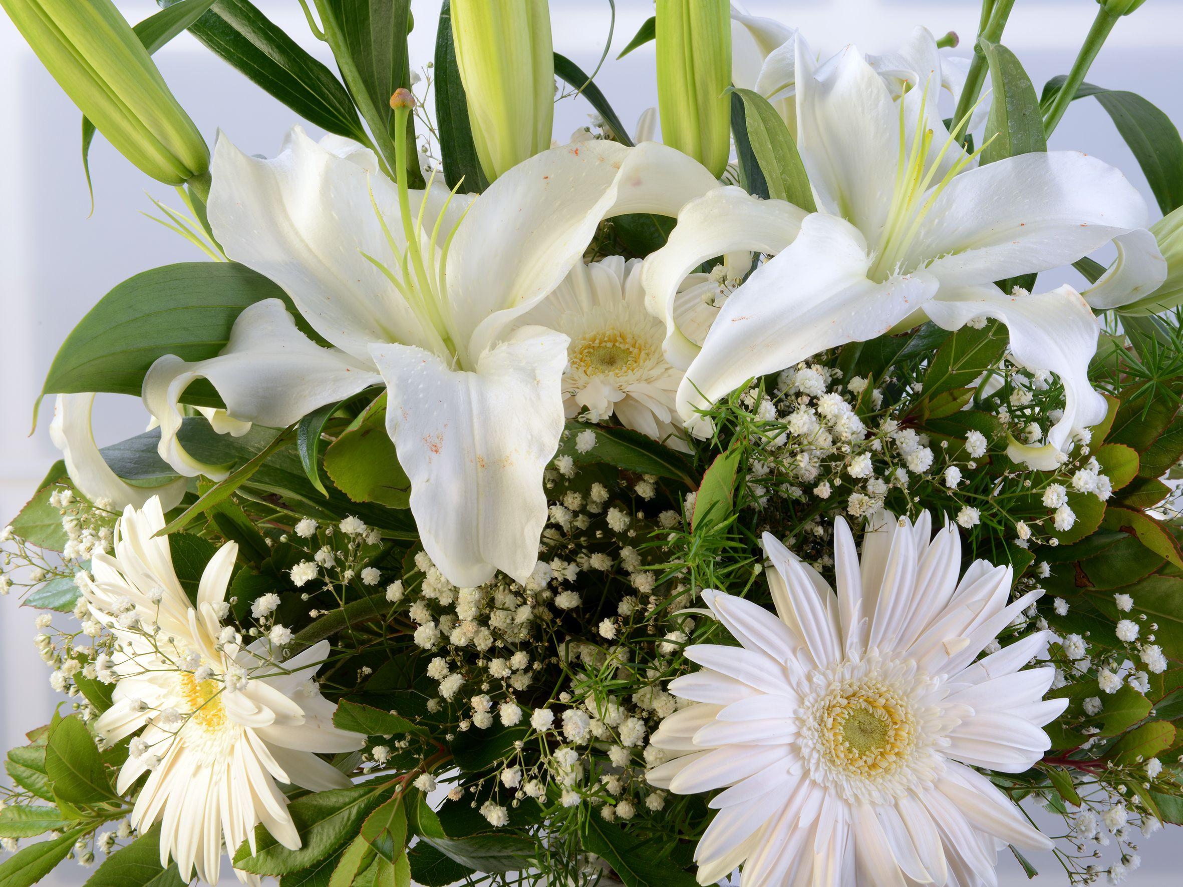 Amfora Cam Vazoda Beyaz Lilyum ve Gerberalar. Aranjmanlar çiçek gönder
