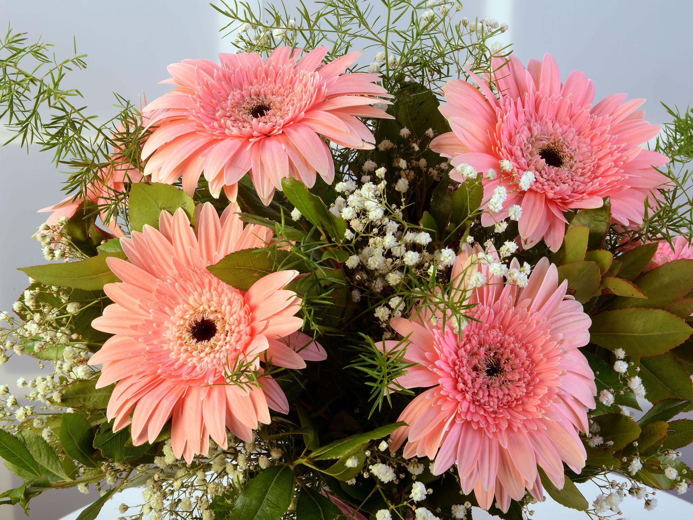 Amfora Cam Vazoda Pembe Gerbera Aranjmanı. Aranjmanlar çiçek gönder
